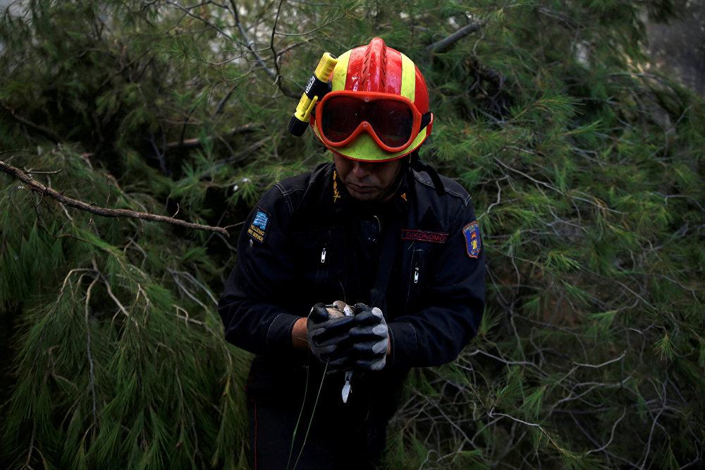Пожарный спасает птицу, застрявшую в горящих ветвях у деревни Капандрити, к северу от Афин, Греция
