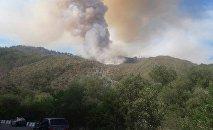 Пожар в Боржоми-Харагуальском лесу