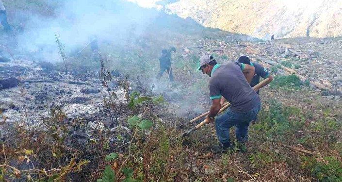 Пожар в Боржоми-Харагаулськом лесу