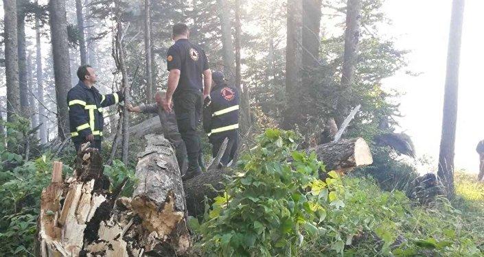 Пожар в Боржомском лесу