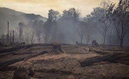 გადაბუგული ტყე სოფელ ყვიბისის მიმდებარედ