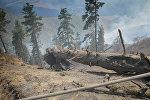 Последствия пожара в Боржоми-Харагаульском лесу