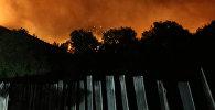 Пожар в Боржоми-Харагаульском лесу