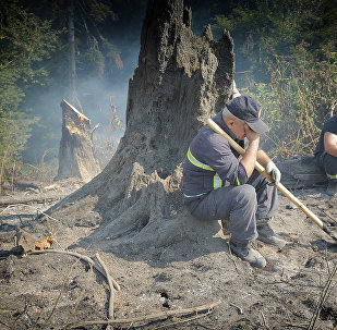 Пожарные-спасатели в Боржоми-Харагаульском лесу