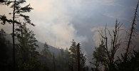 Дым и огонь во время пожара в Боржоми-Харагаульском лесу