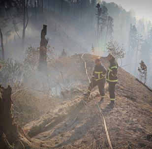 Пожарные и спасатели в Боржоми-Харагаульском лесу