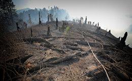 Сгоревшие деревья в Боржоми-Харагаульском лесу