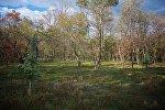 Лес у озера Лиси