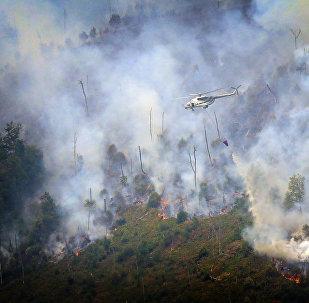 Вертолет тушит лесной пожар в Боржоми-Харагаульском лесу
