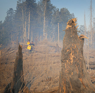 Боржоми-Харагаульский лес после пожара