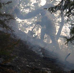 ხანძრის ლიკვიდაცია ტყეში