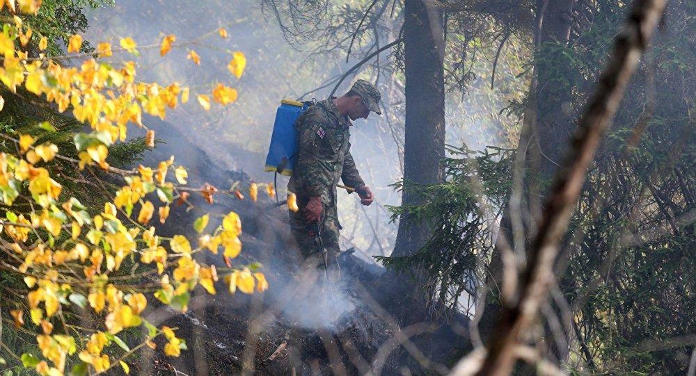 Порошенко отправил вГрузию самолет для тушения лесных пожаров