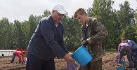 Лукашенко помогает заниматься сбором картофеля в Белоруссии