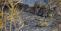 Последствия пожара на горе Мтацминда