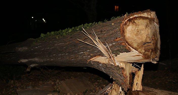 მოჭრილი ხე