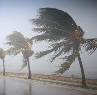 Пальмы на океанском побережье на Карибах склоняются под порывами урагана Ирма