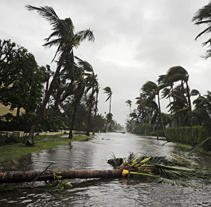 Поломанные деревья в городе Неаполь, штат Флорида, после урагана Ирма