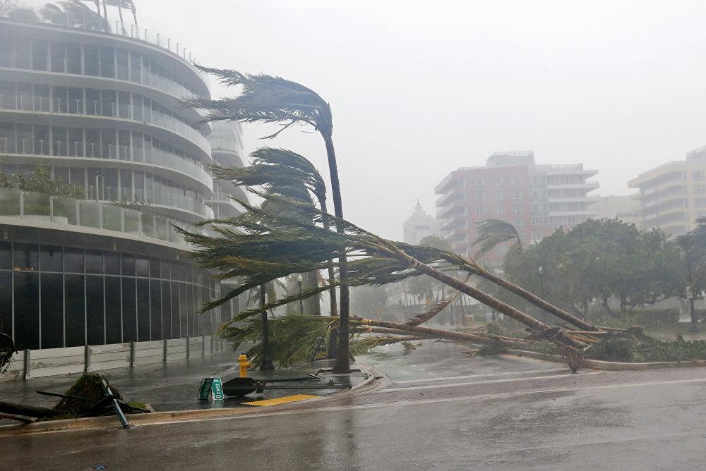 ქარიშხალი ირმას შედეგად წაქცეული ხეეები მაიამიში, ფლორიდა