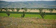Сельскохозяйственные земли в регионе Шида Картли