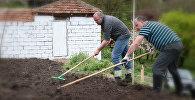 Президент Грузии Георгий Маргвелашвили капает картошку