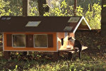Рижанин построил 80 домиков для бездомных кошек