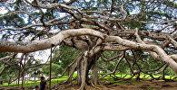 შრი-ლანკის ბოტანიკური ბაღი