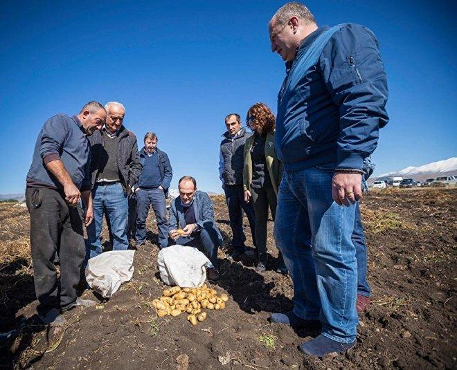 Глава Минсельхоза Грузии Леван Давиташвили ознакомился с уходом уборки картофеля в Ахалкалакском районе