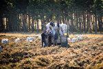 Сбор урожая картофеля в Ахалкалакском районе
