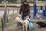 Спаси четвероного друга: как житель Тбилиси помогает бездомным животным
