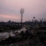 Ущерб, нанесенный природе этими крупными лесными пожарами в Калифорнии, кажется невосполнимым