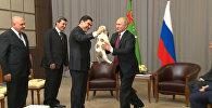 Президент Туркменистана подарил Путину щенка алабая