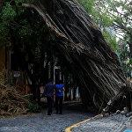 Мощный ураган нанес большой ущерб Пуэрто-Рико. На фото - местные жители проходят мимо упавшего дерева
