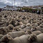 В Лионе собрались французские селекционеры, которые демонстрировали выведенных ими животных