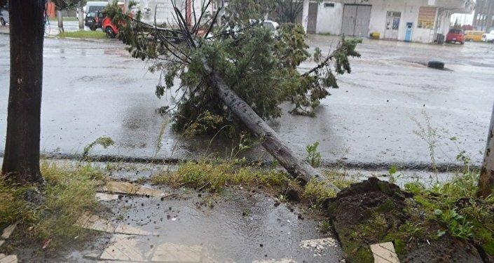 Ветер и сильный дождь повалили деревья в Поти