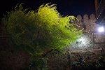 Дерево во время сильного ветра
