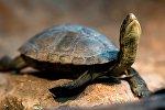Черепаха отдыхает на камне в зоопарке Вены