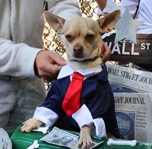 ნიუ-იორკში ძაღლების აღლუმი გაიმართა
