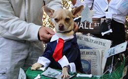 Собачий Хеллоуин состоялся в Нью-Йорке