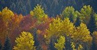 Виды региона Сванети - краски осени. Лес в горах у населенного пункта Местиа