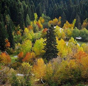 Виды региона Сванети - краски осени. Лес в горах на склонах горнолыжного курорта Хацвали