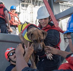 ამერიკელმა სამხედროებმა წყნარ ოკეანეში ორი ქალი და მათი ორი ძაღლი გადაარჩინეს
