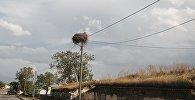 Гнездо аиста на электрическом столбе