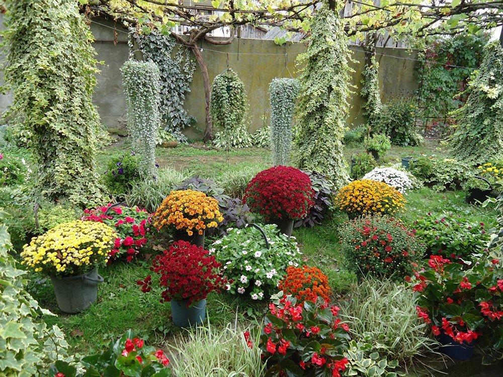 ყვავილების ბაღი