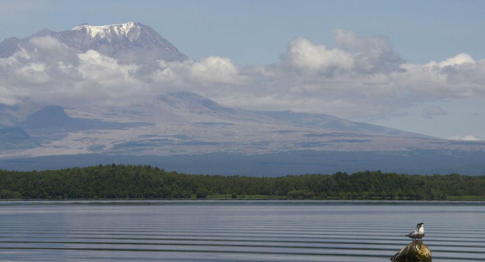 Камчатский вулкан Шивелуч выбросил восьмикилометровый столб пепла