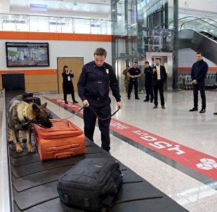სამომსახურეო ძაღლი თბილისის აეროპორტში