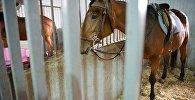 ცხენი სადგომში
