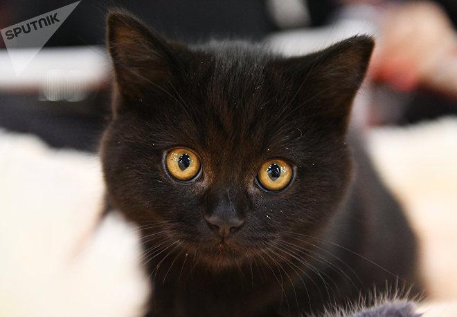 Выставка кошек Кэт-Салон-Февраль в Москве
