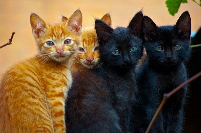 Рыжие и черные котята