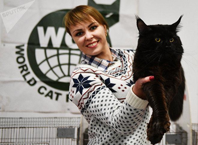 Выставка кошек Зимний кубок Кот-Инфо в Москве