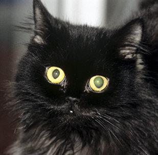 Кошка Сильва, артистка Театра кошек
